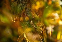 Spiderweb in the Golden Hour
