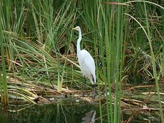 Bird (Hoosierguy Jeff) Tags: sun lake fish hot water boat fishing jeep florida tarponsprings humid laketarpon tarponspringsflorida smokercraft