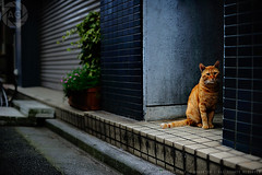 Shy street cat, Tokyo (Alfie | Japanorama) Tags: texture feet nature animal japan cat japanese tokyo nikon floor ground down textures photowalk neko groundlevel colourful nikkor japanorama noraneko sooc theworldatmyfeet straightoutofcamera d700 itpaystolookdown photowalksintokyo photographyworkshopsintokyo nikonpicturecontrols miwakishima shashinosanpo