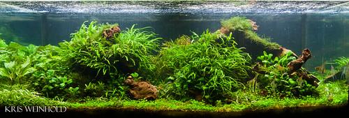 75G Aquarium