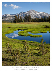 Young Trees and Pond, Dana Meadows (G Dan Mitchell) Tags: california park blue trees summer usa cloud baby mountain lake snow reflection nature grass pine forest pond grove nevada small stock young pass meadows july dana peak crest sierra national mammoth yosemite northamerica tarn range kuna tamarack tioga lodgepole induro