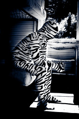 _MG_9250-52 (Tatjanna of T.M Photography) Tags: camera wood shadow abstract black color water grass animal silhouette print model chair colorful pattern mask skin reaching body wheat tiger tights suit human covered zebra second hood material form satin mattress nylon spandex lycra catsuit fitting unitard zentai