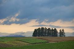 Under The Heavy Clouds... (Claire Chao) Tags: green biei greentree  summerscene    theroadofpatchwork