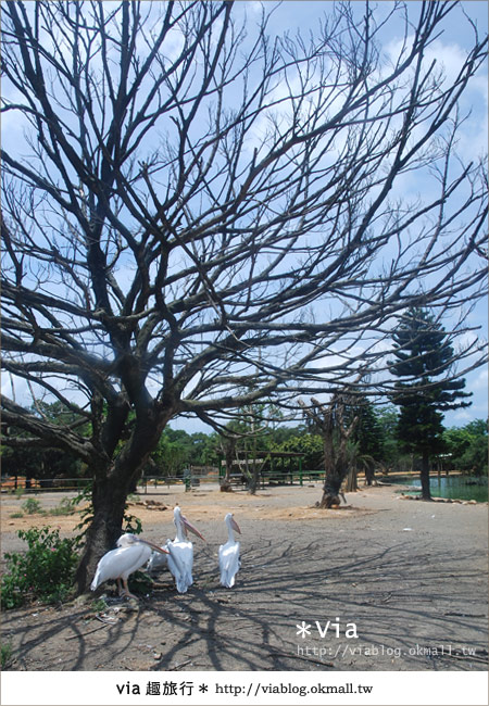 【關西六福莊】精彩秘探野生動物園/DIY手作/農趣樂~!29
