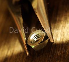 Tighten (David Cucaln) Tags: macro 35mm olympus nut tool pliers 2010 fineartphotography eina e510 herramienta tuerca digitalcameraclub torca cucalon alicates davidcucalon