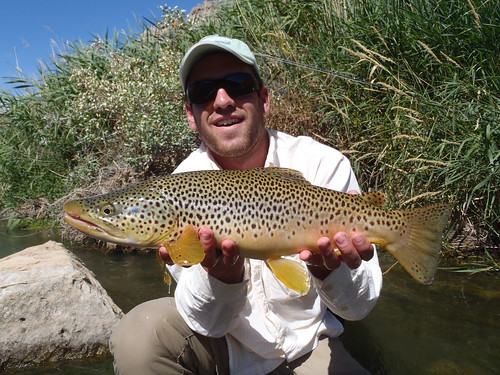 Wind River Brown Trout