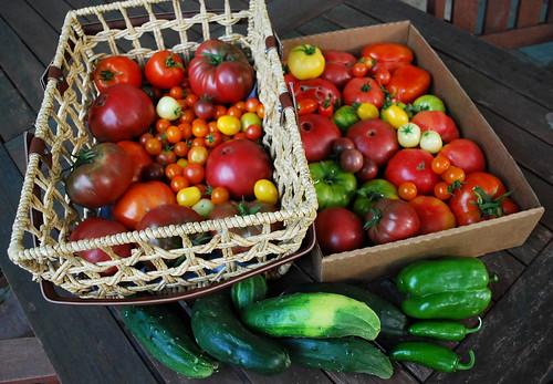 Mid August Harvest 3