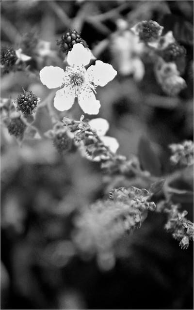 Oneflower