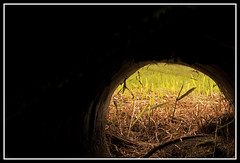 Down the rabbit hole and hide (Andreiuta15) Tags: light grass dark hope hole hide metaphoric rabbithole food4thought flickraward flickraward5