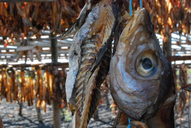 Pescado seco islandés