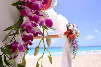 Official Nikon D3100 plus Nikon 18-55mm VR flowers-by-the-beach sample photo