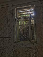 Nature strikes back (invalid_argument) Tags: vienna wien urban abandoned broken lost austria sterreich place decay empty ruin places exploration remains decayed verlassen verloren urbex verfallen
