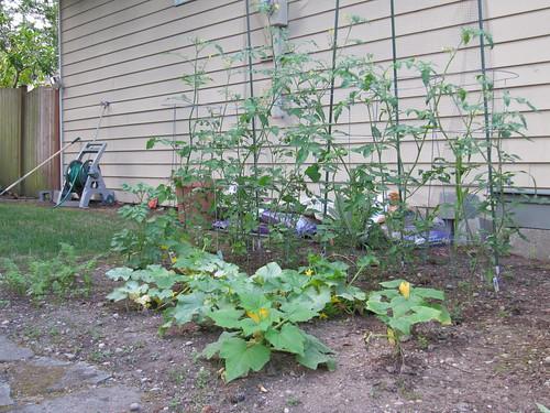 garden mid-Aug