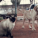 Tom (gato) e Apolo (labrador)