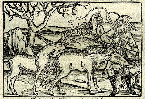 Cervus, Equus et Homo