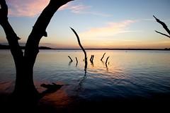 Benbrook Lake morning (LARDO London) Tags: wood morning lake tree silhouette sunrise branch texas ripple fortworth benbrooklake
