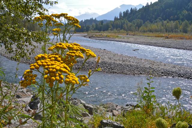Vedder River Photowalk