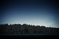 When dusk begins ... ([Graneth]) Tags: wood trees birds canon landscape eos evening abend tokina 7d crows vgel landschaft wald bume 1224 raben