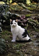 Nuvola (Candideou l'optimisme) Tags: cats kitten nuvola canon20d gatti animalidomestici sigma50150mm28