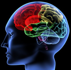 colorful-brain-image-iStock_000005809739XSmall-300x299