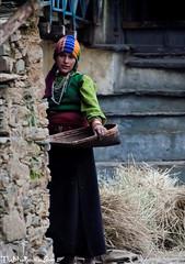 (travelingbone) Tags: blue portrait woman mountain black green dress goat hay tribe hiding himalayan iitkanpur khas nitinpant