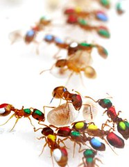 news.2010.427.ants