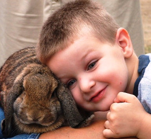 rabbit with boy