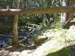 P1000751 (zapzapfrog) Tags: bear olympicnationalpark marmots obstructionpoint