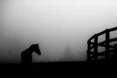 Penned (ICT_photo) Tags: horse silhouette fog rural pen fence farm paddock ictphoto ianthomasguelphontario