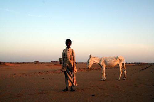 IMG_1151-DonkeyBoy-Sudan