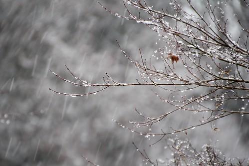 降雪 - 低速シャッター