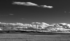 Blue Skies and Clouds Above a Wind Farm in Montana (Black & White) (thor_mark ) Tags: blackwhite blueskies blueskieswithclouds capturenx2edited cloudsabove colorefexpro grassyfields hillsides landscape lookingsouth nature nikond90 outside project365 roadsidestop rollinghillsides sunny windfarm windturbines windmillfarm windmills shelby montana unitedstates canvas portfolio