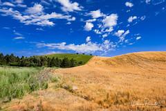 Palouse Region of Washington (Chris Parmeter Photography) Tags: palouse washington hills wheat crop grass sky blue clouds fuji xt2 18135mm