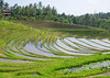 The terraced rice fields, Bali island, Jatiluwih, Indonesia (Eric Lafforgue) Tags: agricultural agriculture asia asian bali2043 balinese breathtaking countryside crops cultivated culture farming farmland fields green growing horizontal indonesia indonesian irrigation landscape lush nature outdoors paddies people reflection ricefields ricepaddies riceterraces rural scenery scenic subak terracefarming terraced terraces terracing unescoworldheritagesite verdant village water jatiluwih baliisland