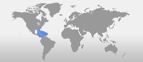 Clypeatus map