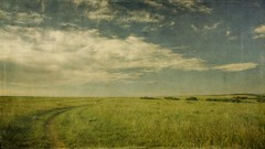 meadow road (jssteak) Tags: road morning sky grass clouds canon vintage landscape colorado horizon meadow dirty dirtroad wildflowers aged plains hdr 16x9 castlepines memoriesbook t1i