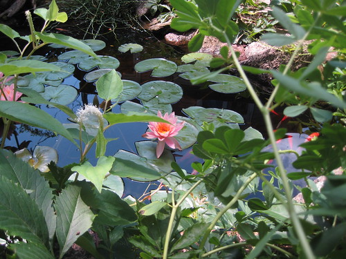 Water lily and lizard tail