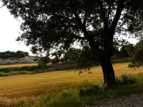 Colors d'estiu al Berguedà