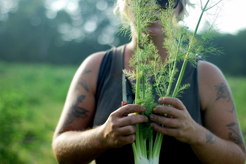 This is some serious fennel.