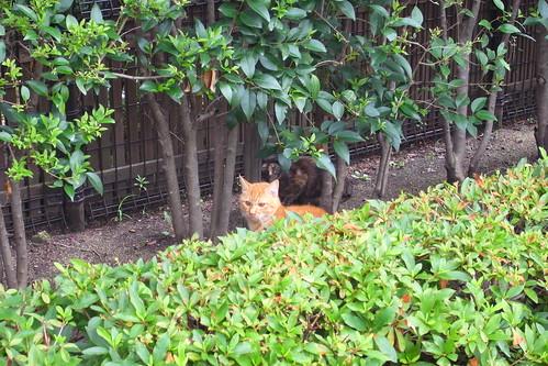 Today's Cat@2010-06-30