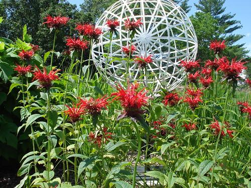 Hamman Rose Garden