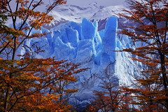 Beyond the Fall by Michael Anderson (AndersonImages) Tags: autumn patagonia ice print lenga photo picture glacier peritomoreno lire elcalafate otono michaelanderson losglaciares serac