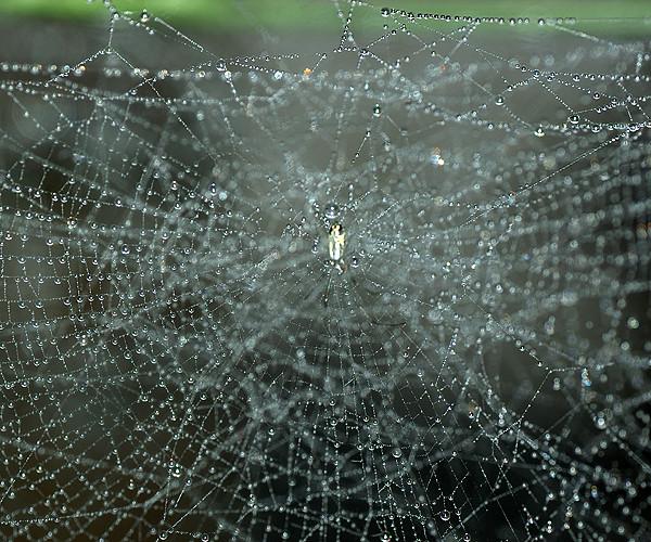 クモの巣の水滴