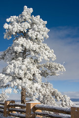 Winter at Bryce Canyon (Tnotn) Tags: winter snow nature beautiful landscape utah scenic bryce brycecanyon brycecanyonnationalpark