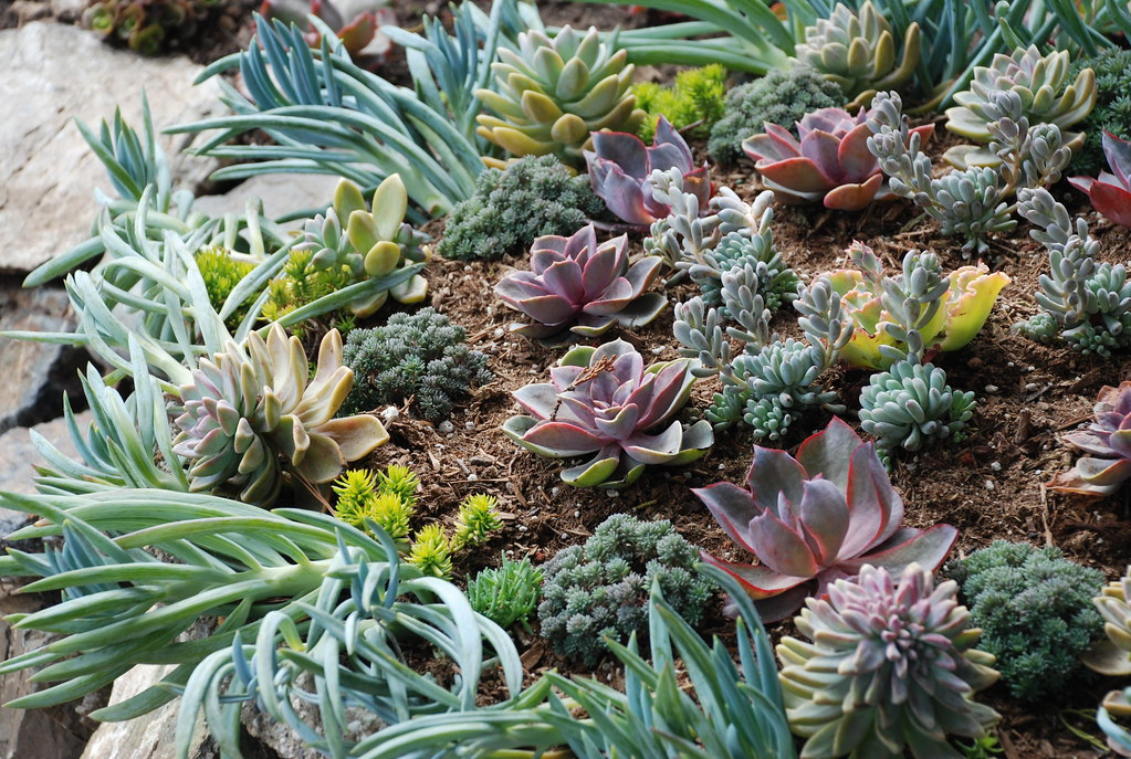 succulents at esalen