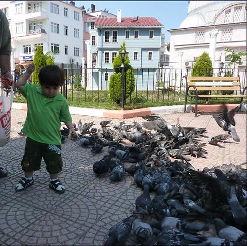kuşlar11