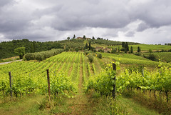 Vineyard in Tuscany (Ciao Anita!) Tags: italy clouds landscape vineyard italia nuvole si wolken tuscany siena toscana 1001nights toscane paesaggio landschap itali wijngaard vigneto bellitalia theperfectphotographer absolutelystunningscapes