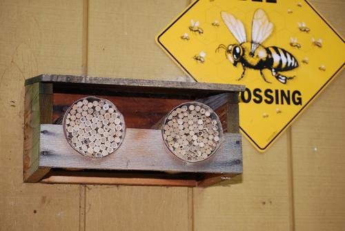 Meet a naturalist: mason bee nests