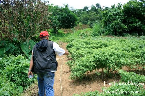 Cantipla Sudlon Organic Farms