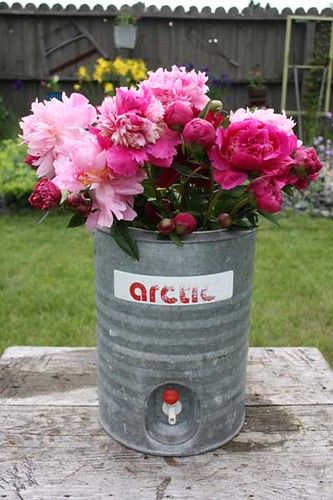 Grandma's Peonies in Artic Cooler